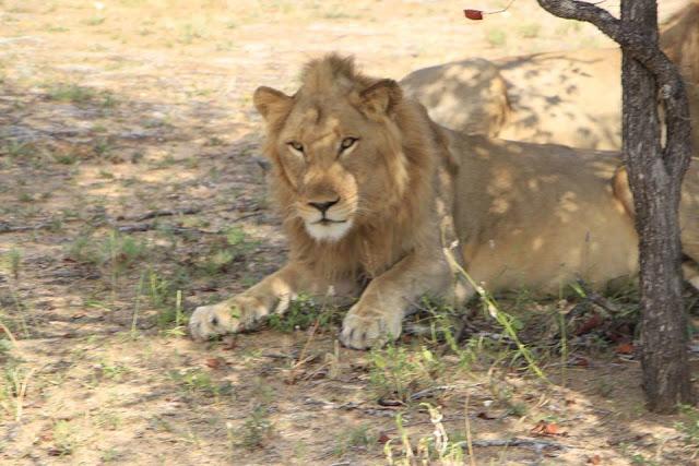 safari sudáfrica