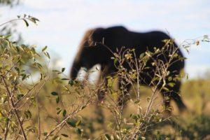 elefante_safari_parque_kruger_sud-25C3-25A1frica.jpg
