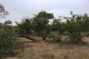 ir_de_safari_parque_kruger_sudafrica_.jpg