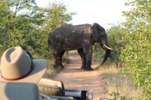 safari_parque_kruger_elefante_aficano_sudafrica.jpg